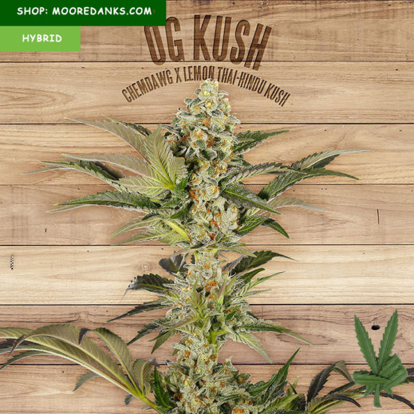 OG-Kush-for-sale