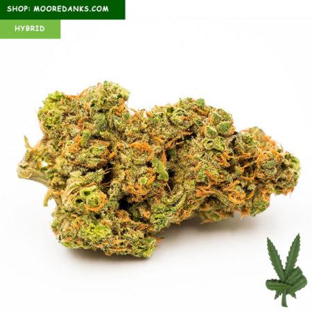 OG-kush-weed-strain