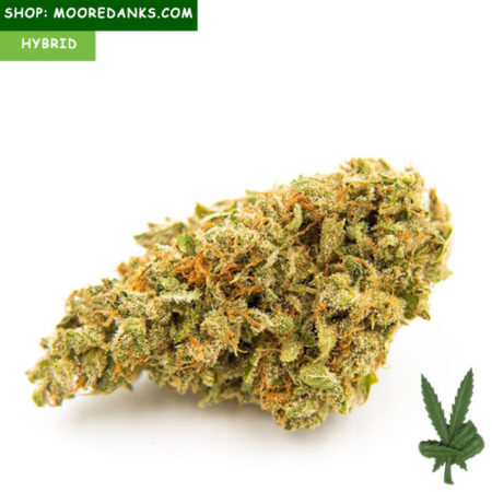 Bubble-Gum-marijuana-strain-595x595