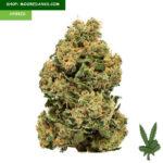 Chemdawg-weed-strain-