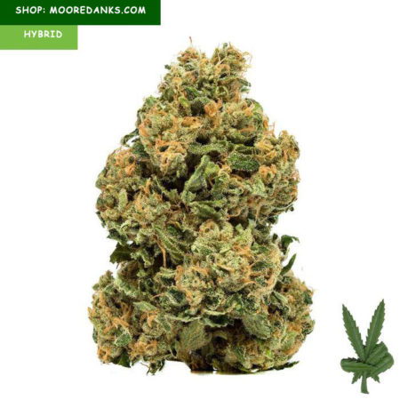Chemdawg-weed-strain-