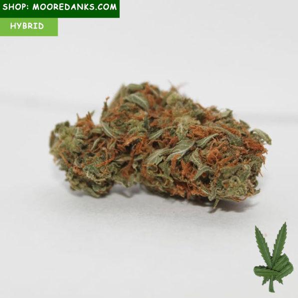 Chemdog-marijuana-strain-595×595