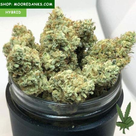 Gorilla-Glue-4-strain-595x595