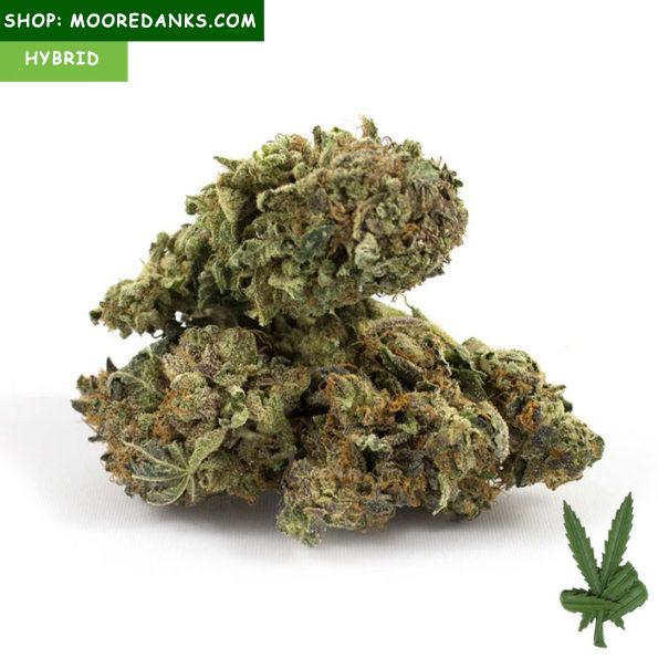 Banana-Kush-Marijuana-Buds-595×595