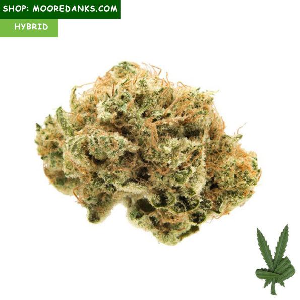 Banana-Kush-Buds-595x595