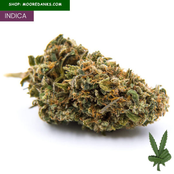 Blueberry-strain