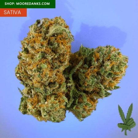 Harlequin-marijuana-strain