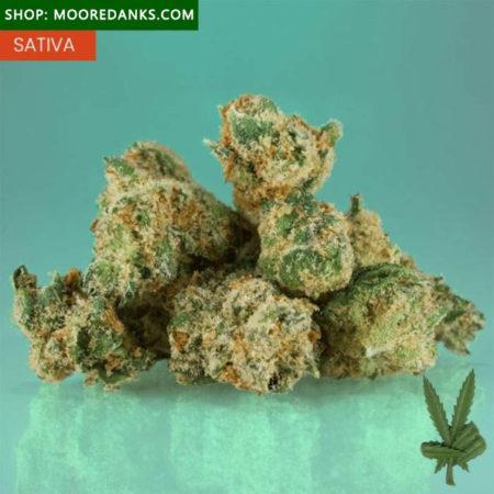 Jack-Herer-weed-595x595