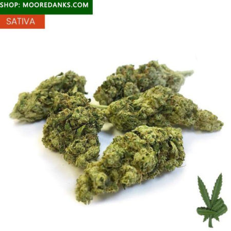 Sour-Diesel-marijuana-595x594