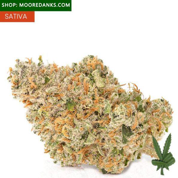 weed-strains-jack-herer-595×595