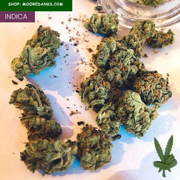 G-13-marijuana-strain-1